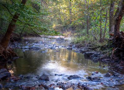 Duke-Forest-10-17-2015