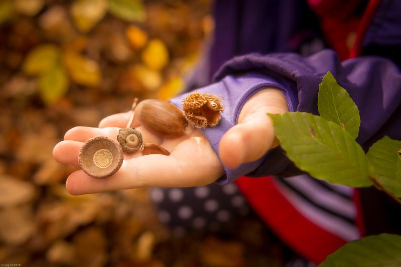 Herbstfrüchte / autumn fruits