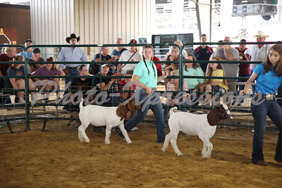 Goat Show 9-22-2019
