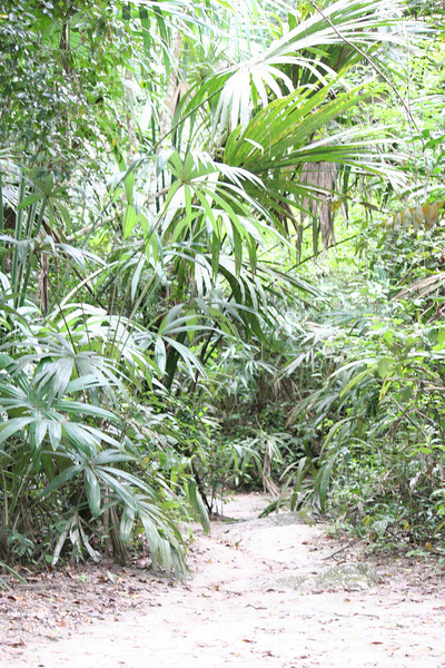 Guatemala Tikal 0 068.JPG