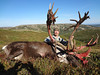 Alaska Wilderness Safaris : Personally Guided Fair Chase Hunts For Alaskan Big Game. 