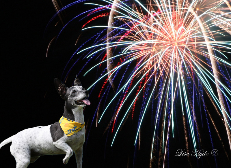Cookie and Fireworks JULY signed.jpg