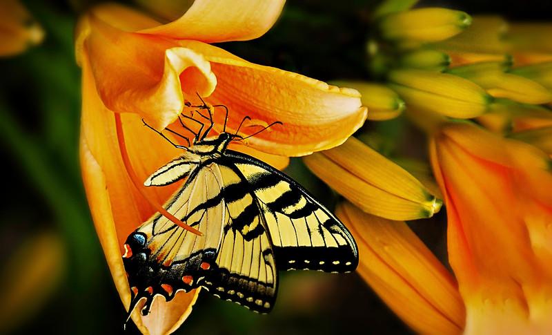 Butterfly-080.jpg