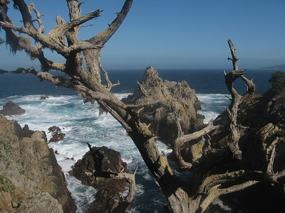 Point Lobos State Reserve - May 2, 2010