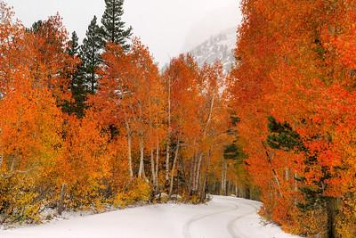 Bishop Creek Fall Color