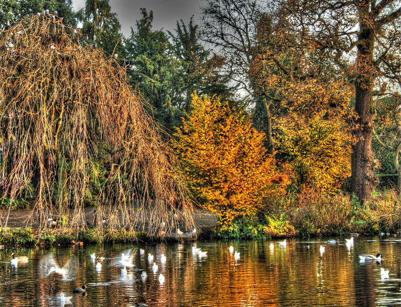 SheenaD_Lake in Autumn.jpg