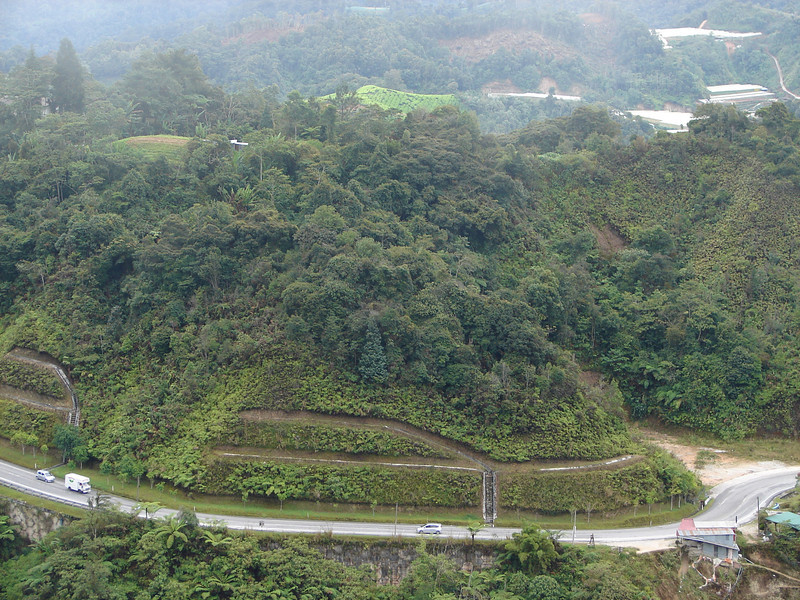 Cultivation in Cameron Highlands (1).JPG