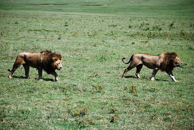 Ngorongoro (149).JPG