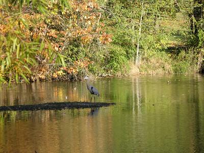 Nature in Fall - October - November 2007