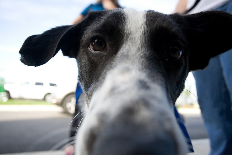 Petsmart_Puppies_RLoken_006_9030.jpg