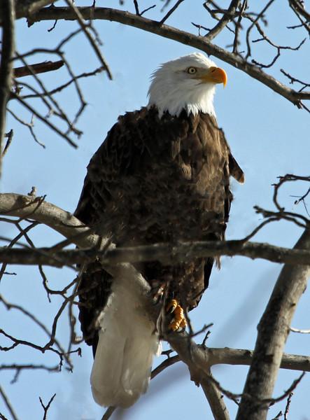 bald eagle 214_edited-1.jpg