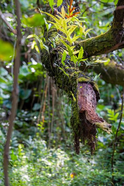 Tropical Broken Branch