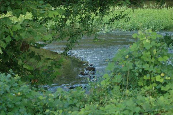 Journal Site 3: Tellico Plains, TN - Aug. 8, 2005