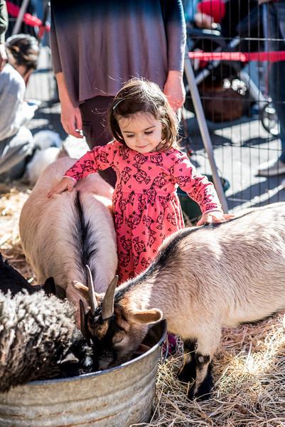 Temescal Holiday Fair