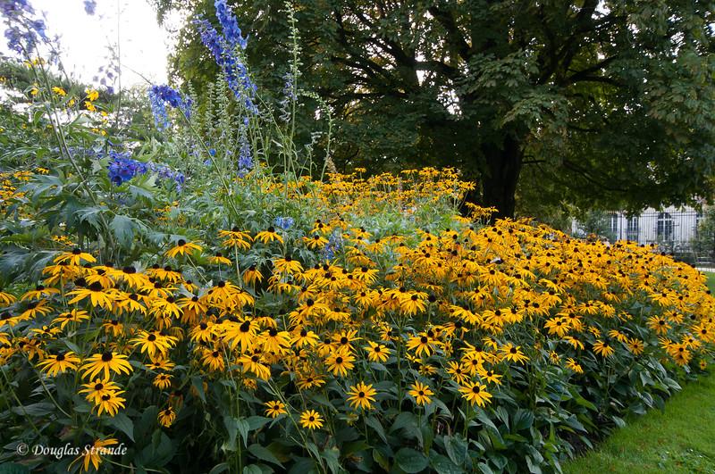 Flowers in Luxembourg Garden
