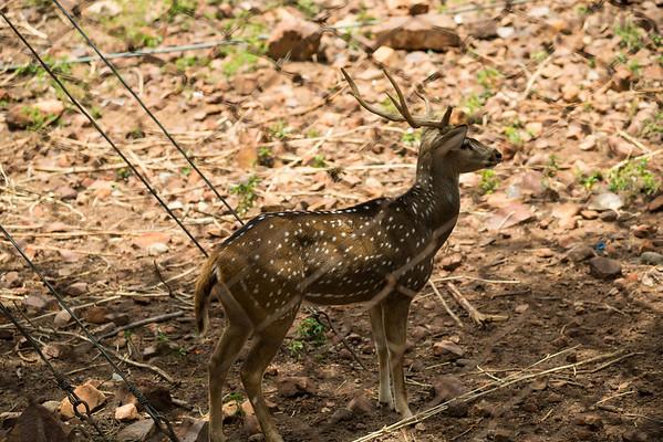 Tirumala Deer Park