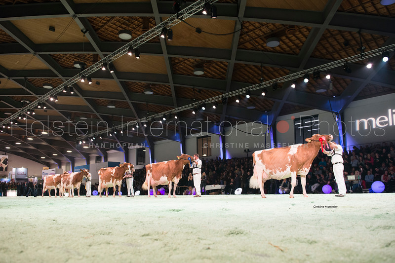 misc-red-holstein_120118-0204.jpg