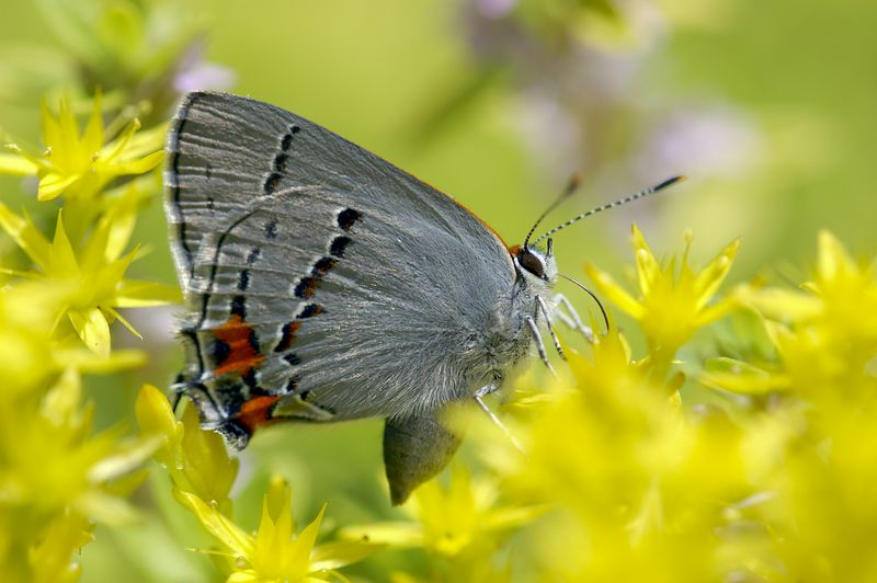 butterflyazure.jpg