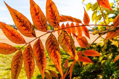 Fall at Home 2013