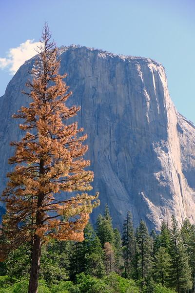 California Day 7 Yosemite 06-01-2017 67.JPG