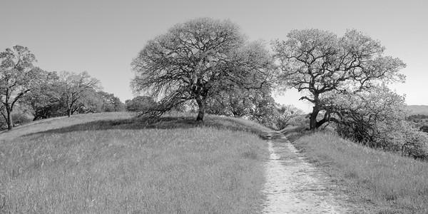 Stokley B&W Nature