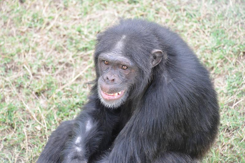 East Africa Safari 16.jpg