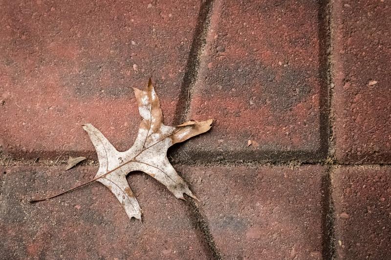 oak leaf on patio stone -9340.jpg