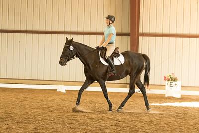Horse 619