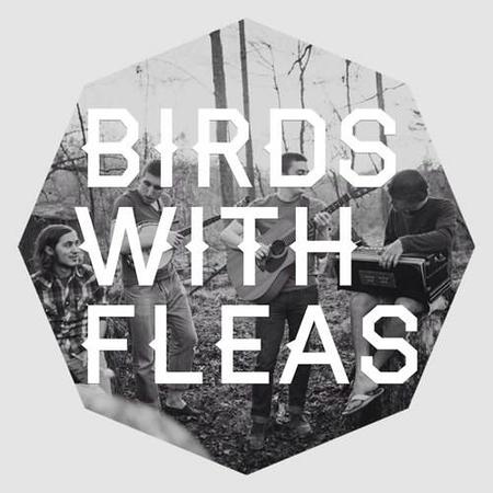 Birds With Fleas Gallery