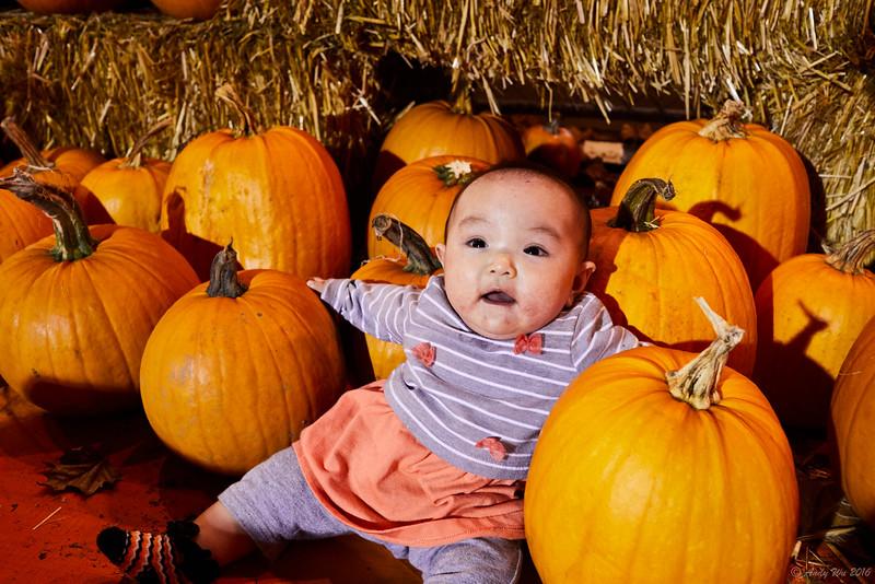 pumpkin__13.jpg