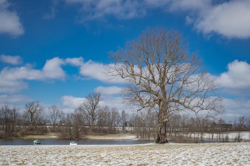 Mereworth farm 3.04.19