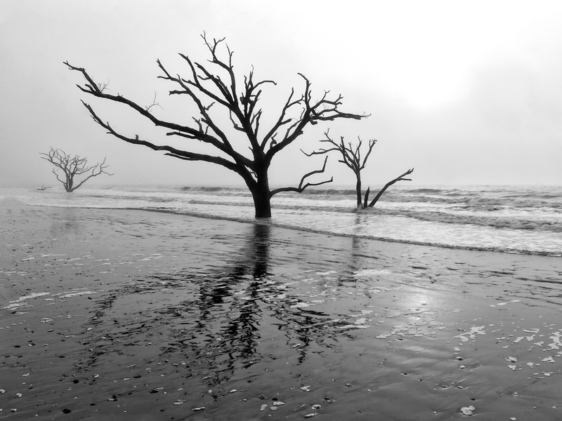 Edisto Tree Monochrome 5.jpg