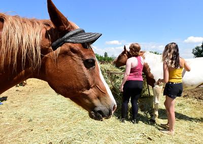 Photos: Boulder Prep Summer Equestrian Program