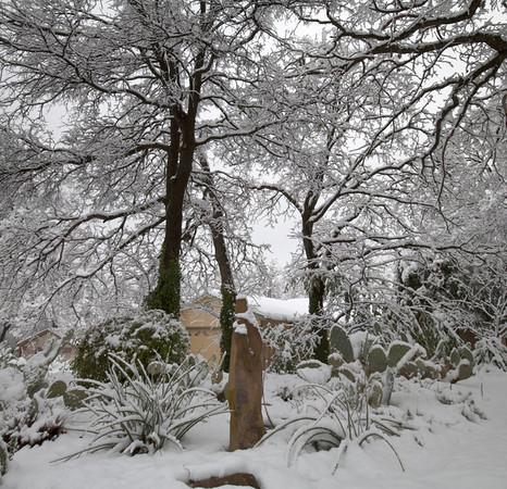 Grapevine in Winter