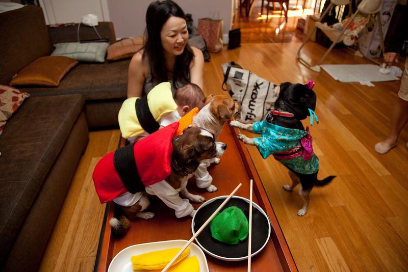 Dog-sushi-halloween-67.jpg