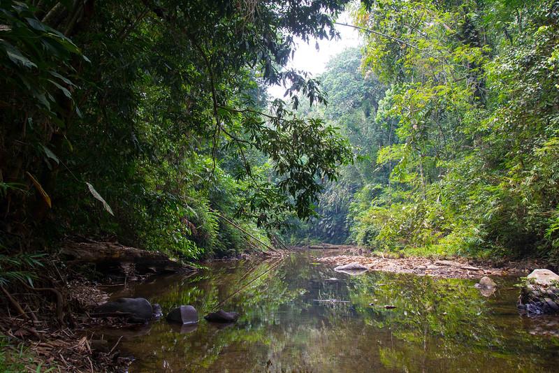 Borneo-2014-42.jpg