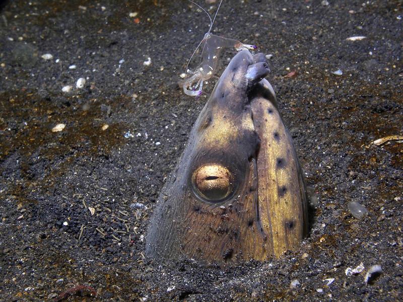eel snake shrimp 21.jpg