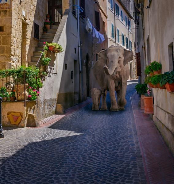 Elephant alley