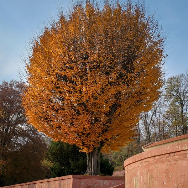 brevnov stromy-008.jpg