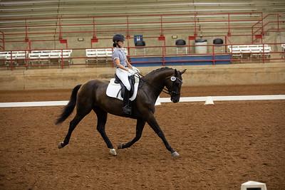Horse 469