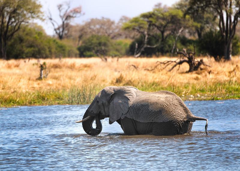 2014-08Aug-Okavango Masters-42-Edit.jpg
