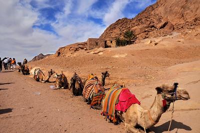 Egypt - Sinai