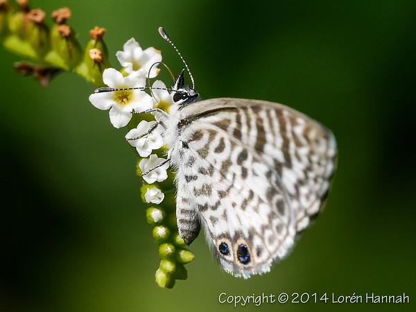 L's FL Butterflies & Bugs