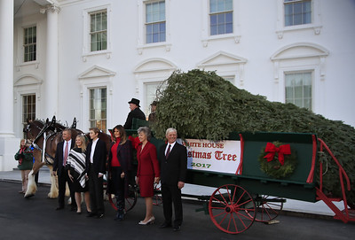 christmas-tree-arrives-at-the-whitehouse