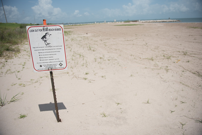 A sign warning beach guests to watch for shore birds nesting in the area.