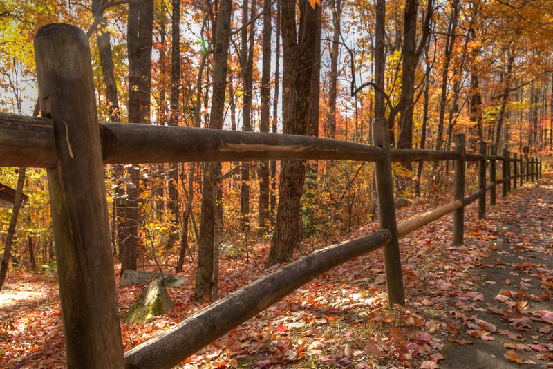 Fall color in the Nantahala National Forest - North Carolina