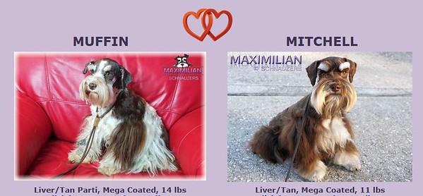 Muffin & Mitchell Puppies, DOB 3/27/2021
