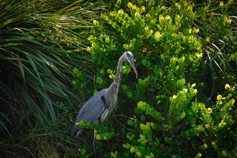Everglades-28.jpg