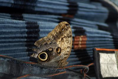 ButterflyShow08