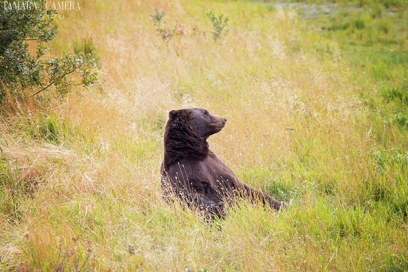 Bear-5-2.jpg